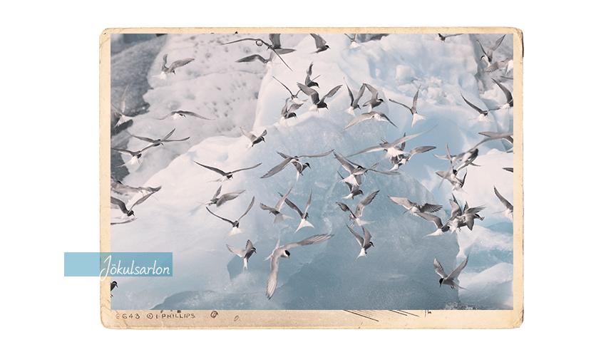 carte postale 1d_850x508
